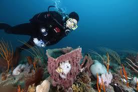 Grays Reef