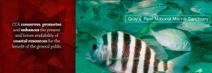 rotator_generals_Grays_Reef_2